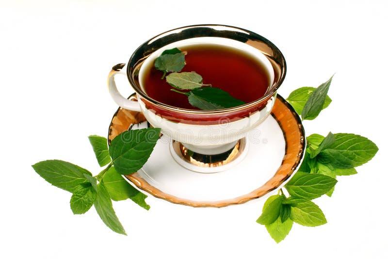 Chá do pulegium do mentha da hortelã imagem de stock royalty free