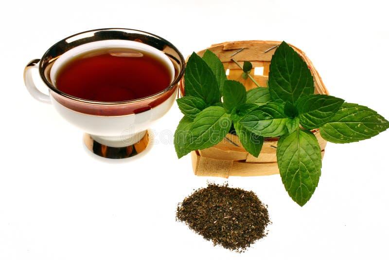 Chá do pulegium do mentha da hortelã imagens de stock