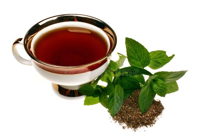 Chá do pulegium do mentha da hortelã fotos de stock