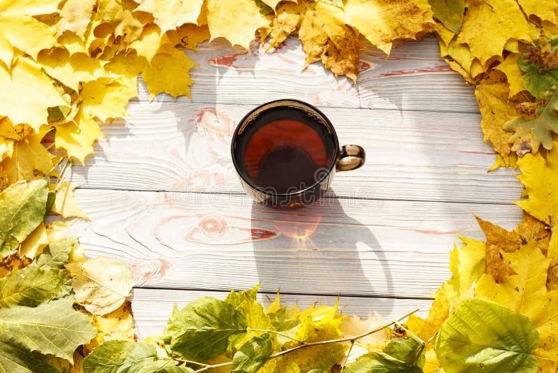 Chá em um copo transparente escuro com folhas de outono em uma tabela de madeira azul, em um copo uma folha do outono imagens de stock
