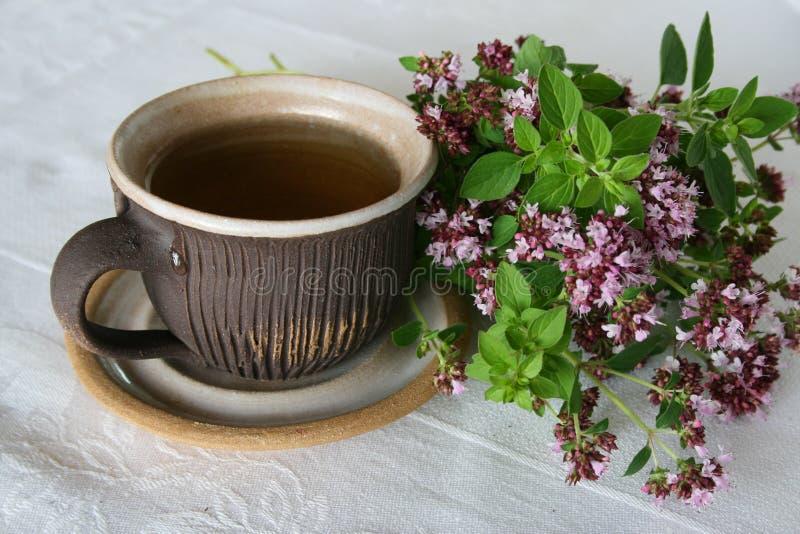 Chá erval imagens de stock