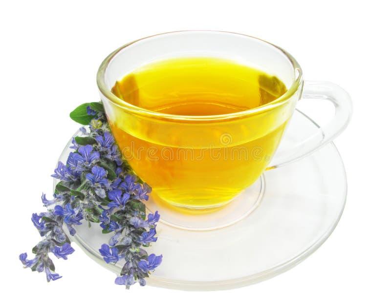 Chá erval com extrato da alfazema fotos de stock