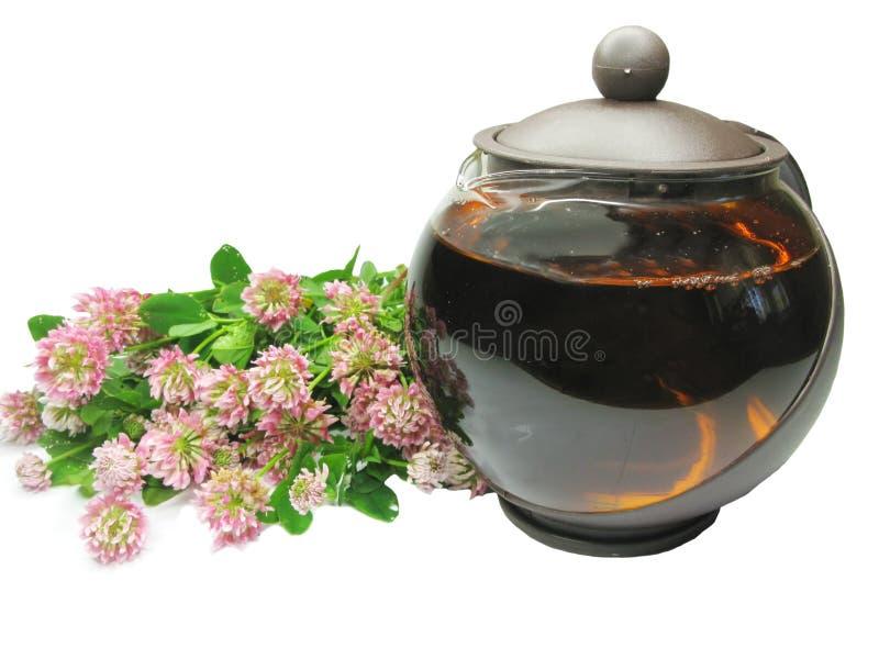 Chá erval com extrato do trevo imagens de stock royalty free