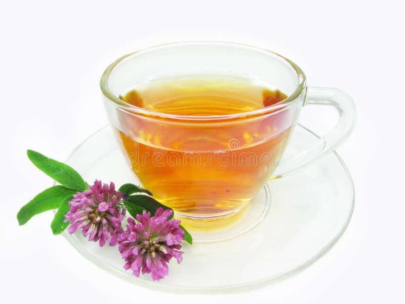 Chá erval com extrato do trevo foto de stock
