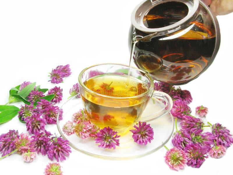 Chá erval com flores do trevo imagens de stock