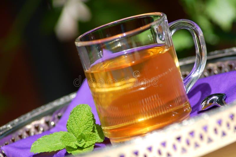 chá erval com hortelã fresca imagens de stock