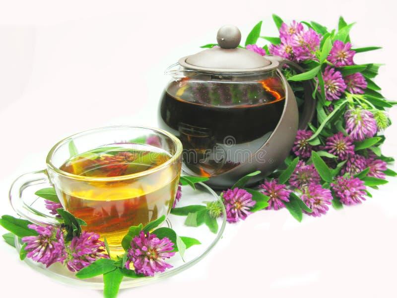 Chá erval com trevo cor-de-rosa fotografia de stock royalty free
