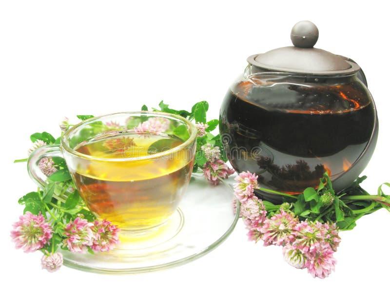 Chá erval no tea-pot com trevo fotografia de stock