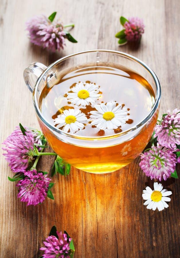 Chá erval quente com trevo imagens de stock
