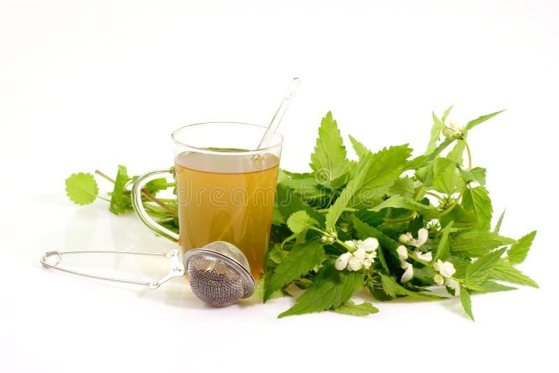 Chá erval saudável foto de stock