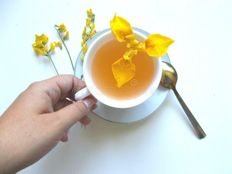Chá no copo branco com flores e mão amarelas imagem de stock