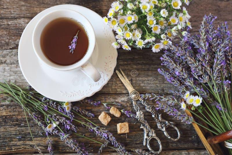 Chá romatic da alfazema do  de Ð, alfazema fresca e camomila selvagem imagem de stock