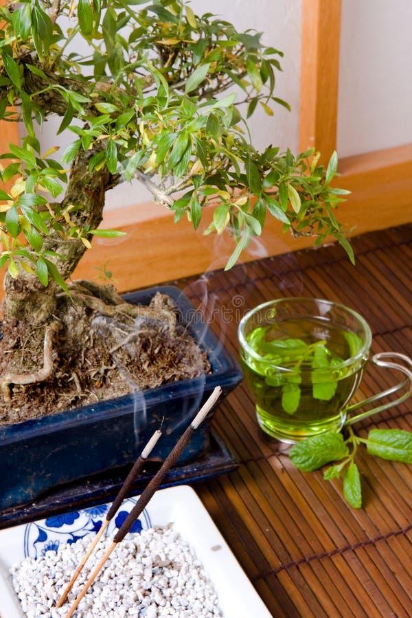Chá verde e bonsais fotos de stock royalty free
