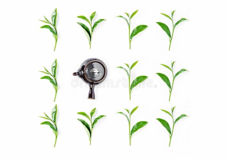 Chá verde em um bule no fundo branco fotografia de stock