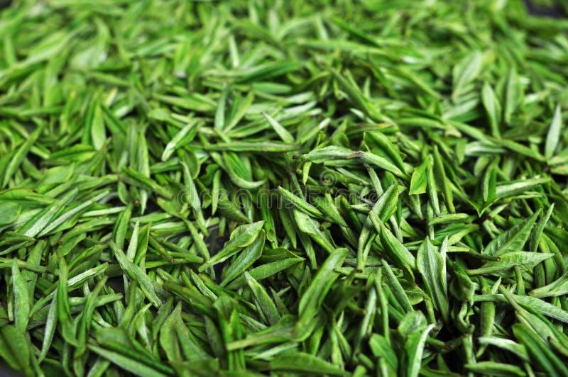Chá verde fresco fotografia de stock
