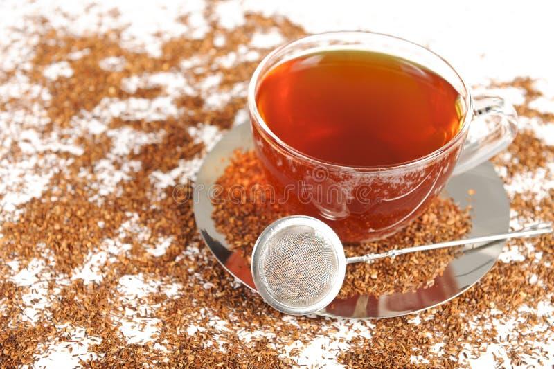 Chá vermelho saudável do arbusto de África do Sul foto de stock