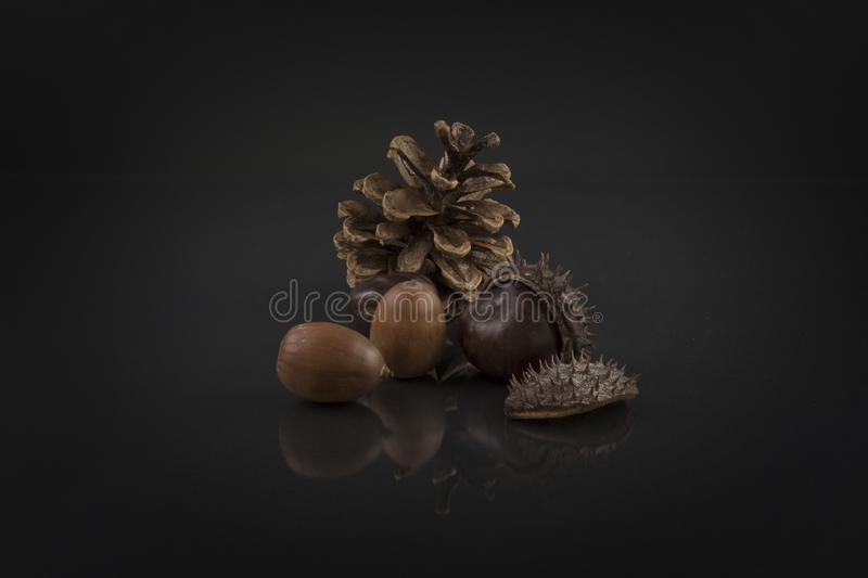 Châtaigne, glands et cône de pin sur le noir Photo artistique de marron d'Inde photographie stock