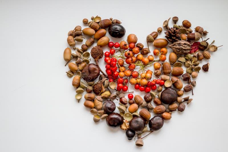 Châtaignes, baies de sorbe, ashberry et glands formant un coeur sur le fond blanc J'aime l'automne Feuilles de chute, récolte photo libre de droits