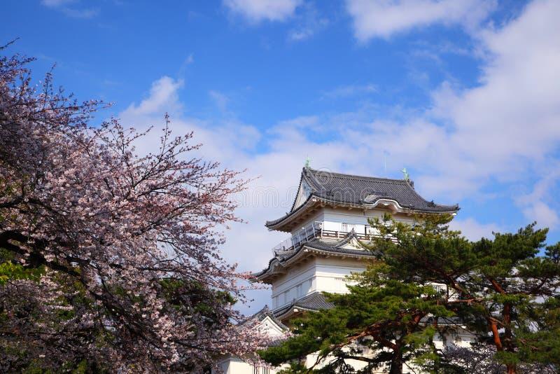 Château d'Odawara et fleur de cerise photos stock