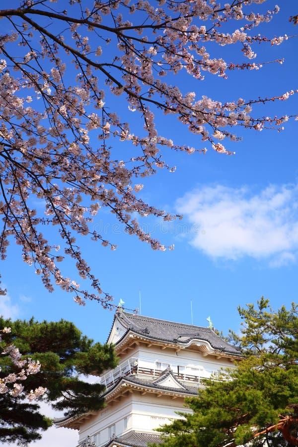 Château d'Odawara et fleur de cerise photo libre de droits