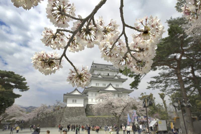 Château de Cherry Blossom et d'Odawara image stock