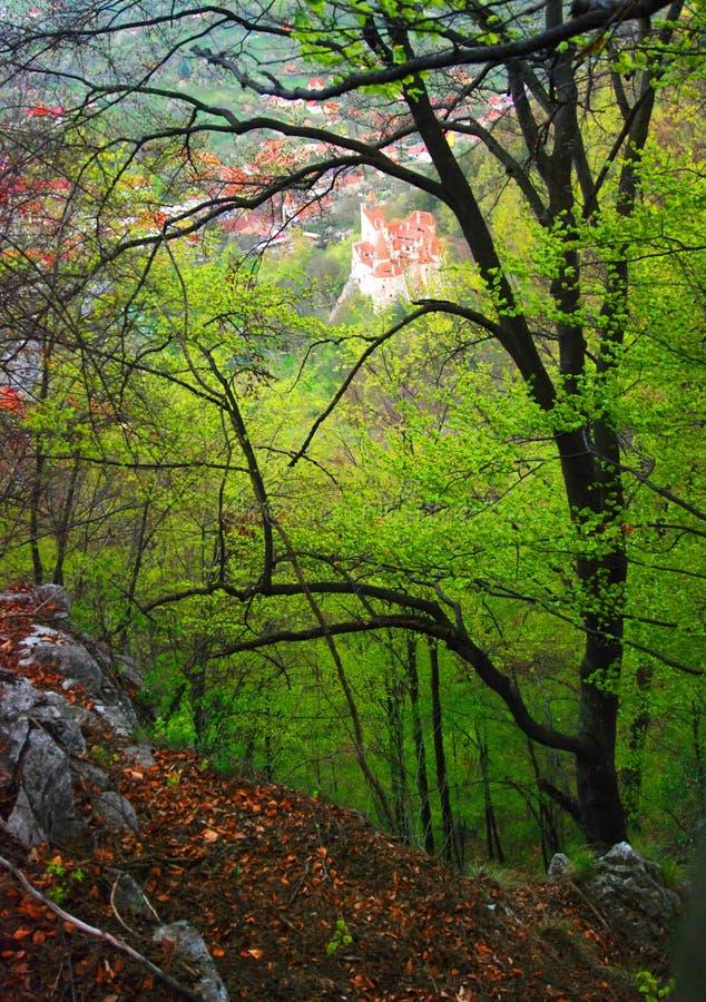 Château de forêt et de son photo stock