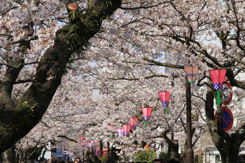 Château et fleurs de cerisier d'Odawara images libres de droits