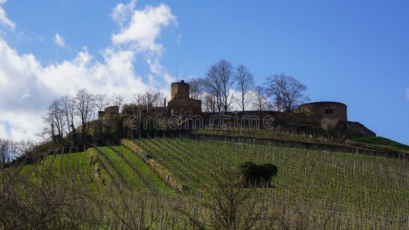 Château sur la ruine de forteresse de colline de vignoble photos stock
