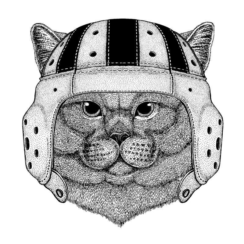 Chłodno zwierzęcy jest ubranym rugby hełma sporta Brithish kota Krańcowa gemowa szlachetna Męska ręka rysujący wizerunek dla tatu ilustracji