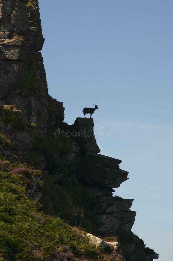 Chèvre sur la roche photos stock