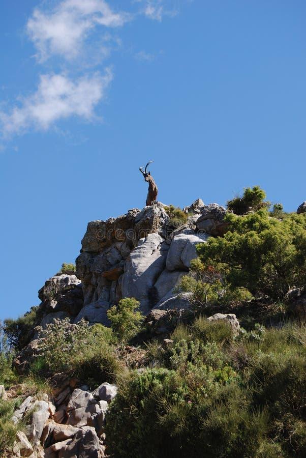 Chèvre sur mountian, Refugio de Juanar, Espagne. image libre de droits