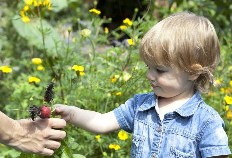 Chéri donnant des radis de mère photos libres de droits