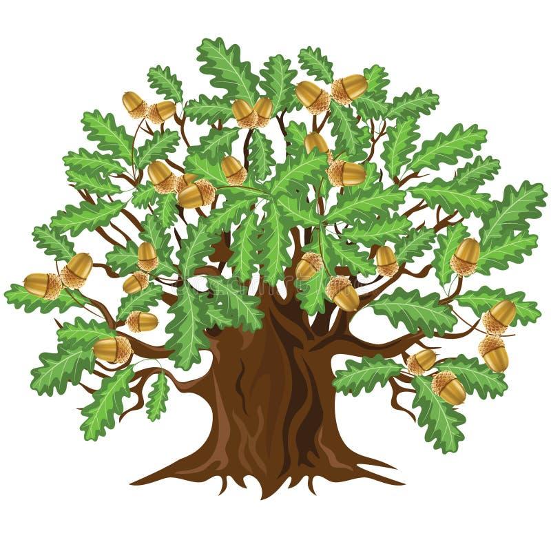 Chêne avec des glands, illustration de vecteur illustration stock