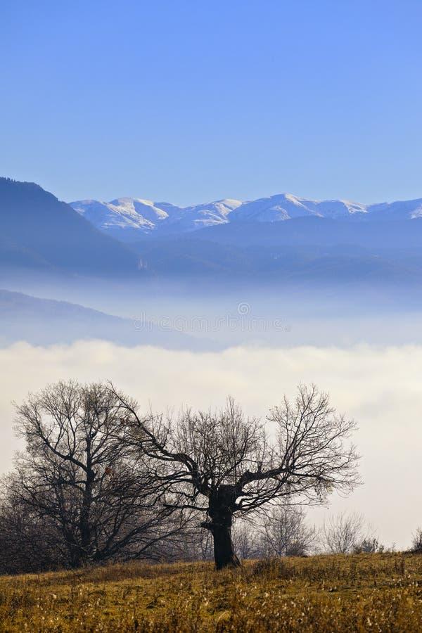 chêne avec la montagne sur un fond enveloppé photographie stock libre de droits