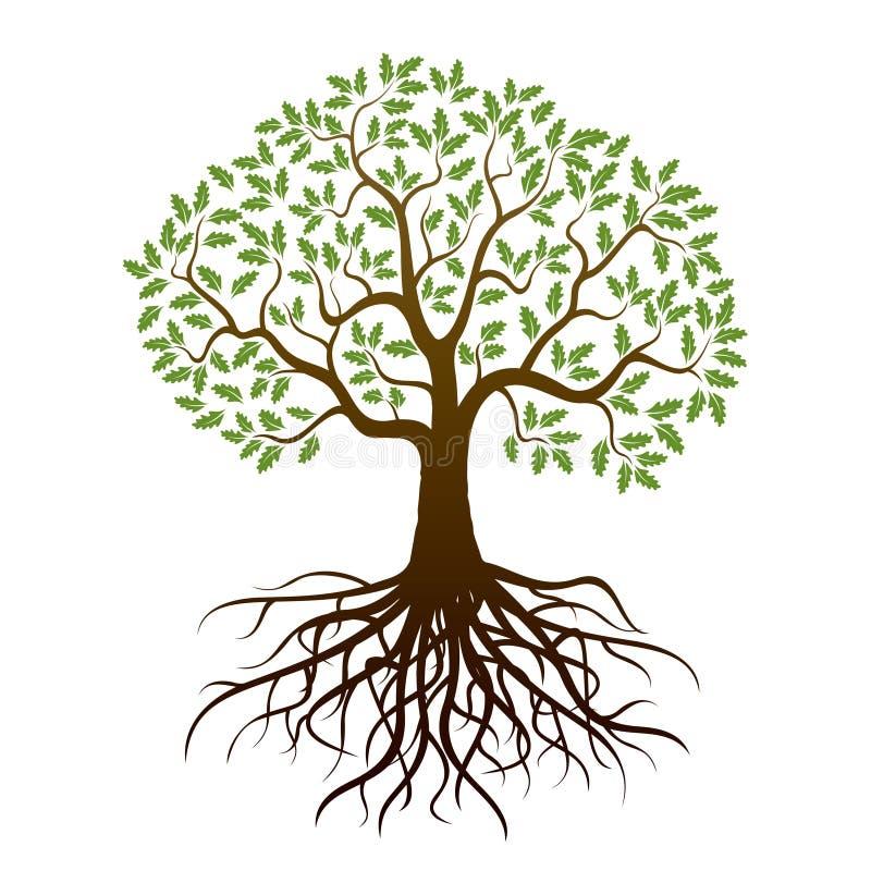 Chêne de couleur