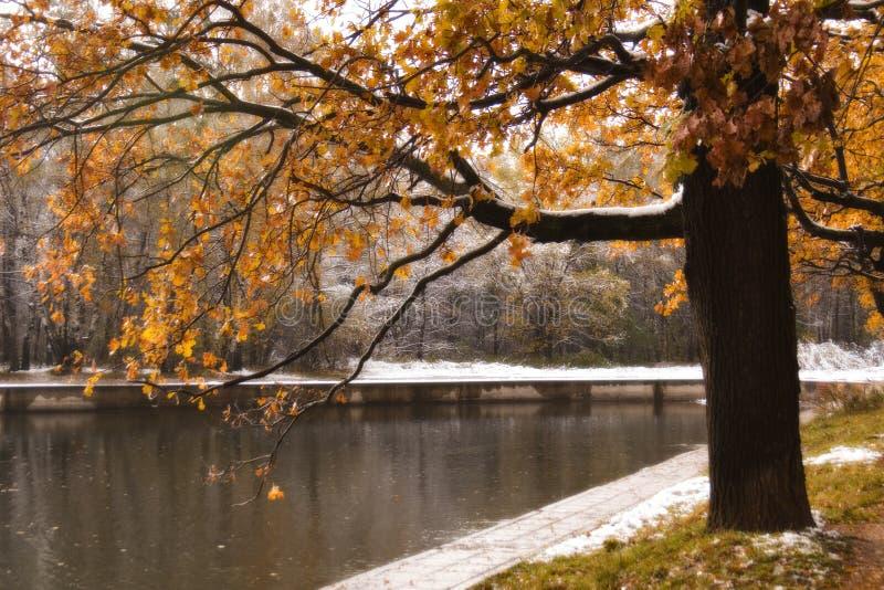 Chêne près d'étang photos stock