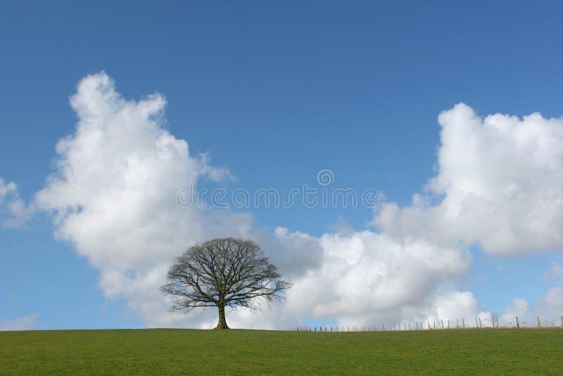 Chêne solitaire de l'hiver photographie stock