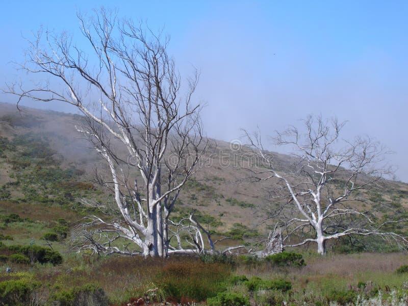 Chêne tinctorial de la Californie, herbe d'or, et ciel bleu photos stock