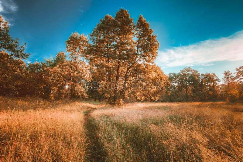 Chênes d'Autumn Landscape With Sunny Forest, herbe verte et ruelle images stock