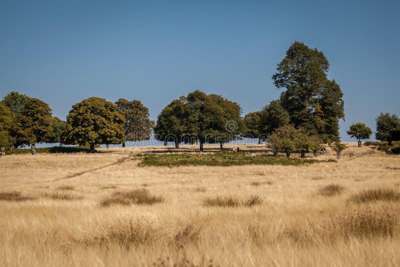 Chênes sur un horizon avec le ciel bleu photo stock