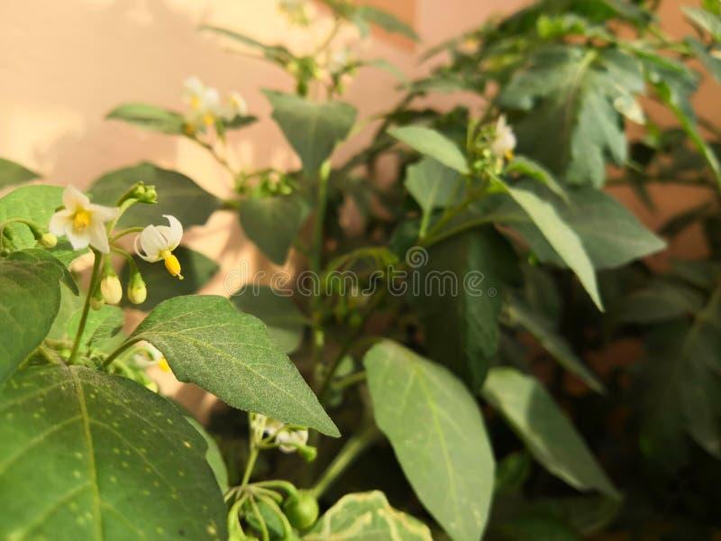 Chłodna roślina I kwiat zdjęcia royalty free