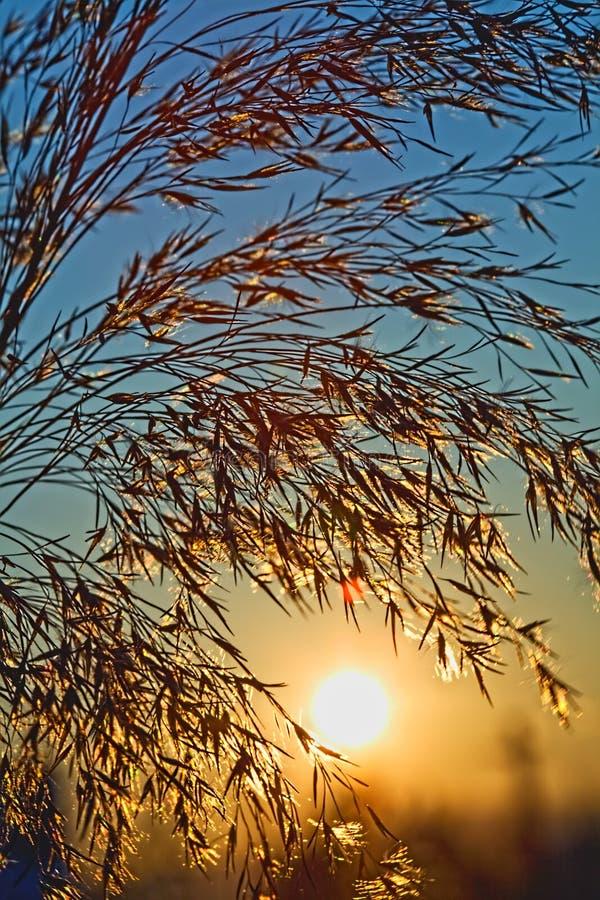 chłodno dzień chwalebnie ranek powstający lato słońce fotografia royalty free