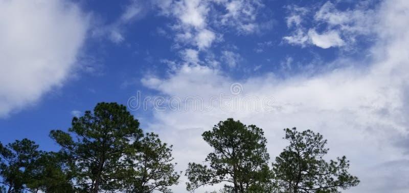 Chłodno Wietrzny letni dzień Częsciowo Chmurny zdjęcie stock