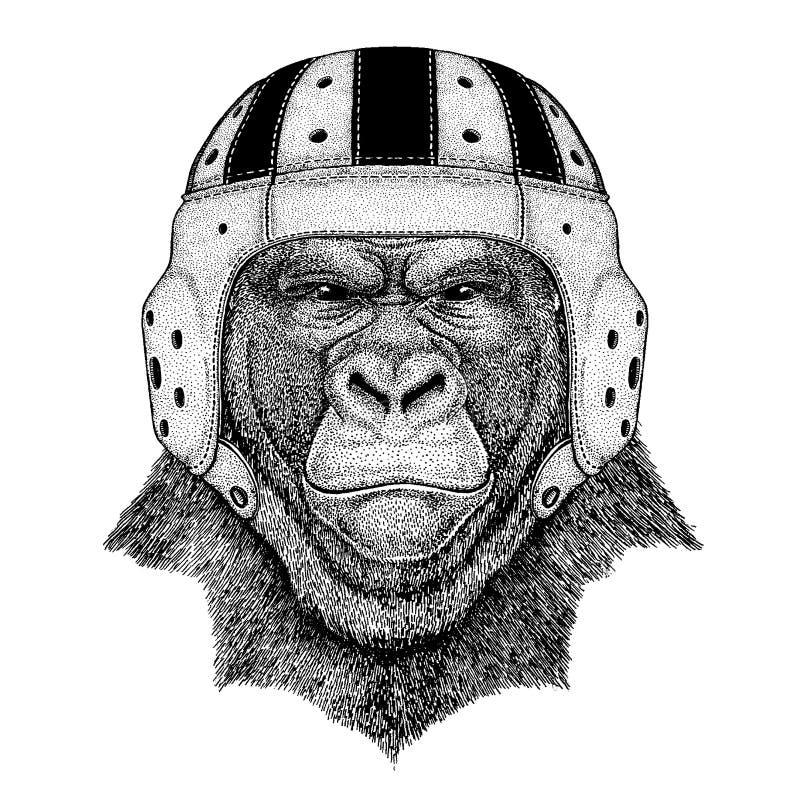 Chłodno zwierzęcy jest ubranym rugby hełma Krańcowego sporta gemowy goryl, małpa, małpuje Frightful zwierzęca ręka rysującego wiz ilustracji