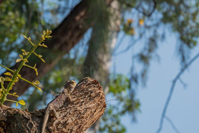 Chłodny kamuflaż jaszczurkowy, który przetrwa zdjęcie royalty free