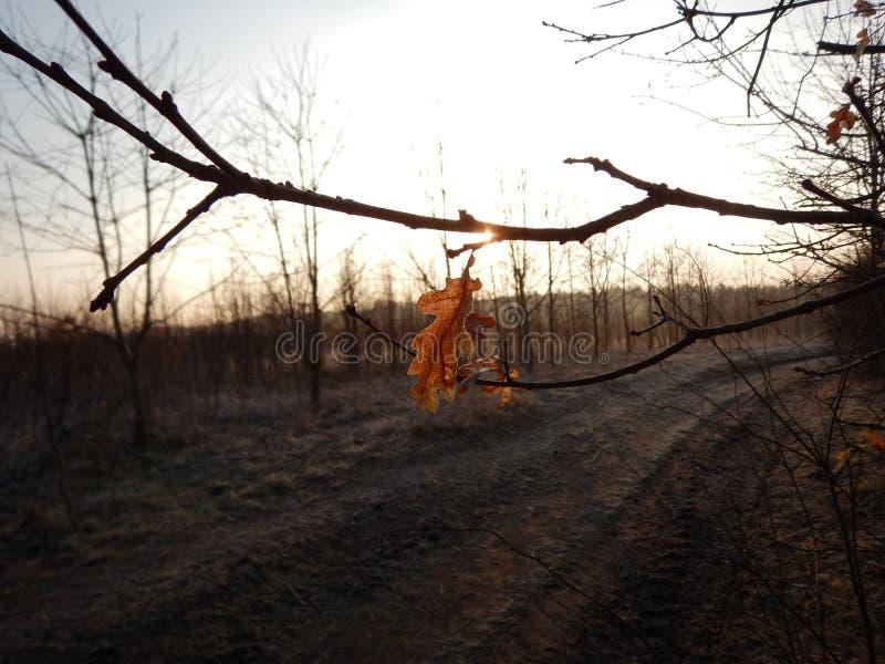 Chłodny ranek w jesieni naturze obraz stock