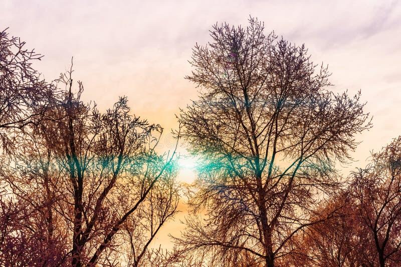 Chłodny zimy sunbeam przechodzi przez gałąź drzewo fotografia royalty free