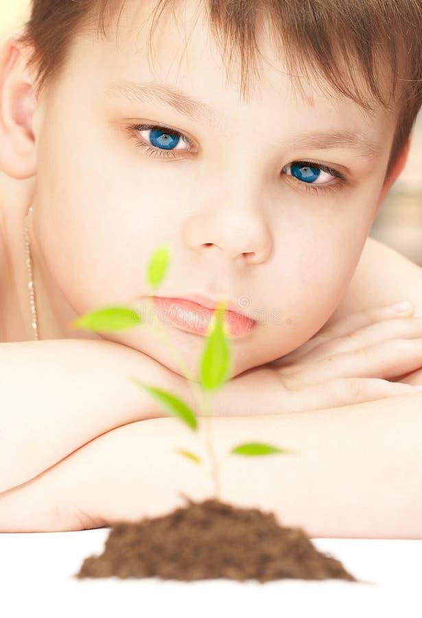 chłopcy roślinnych fotografia royalty free