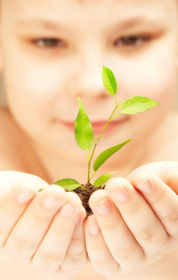 chłopcy roślinnych obrazy royalty free
