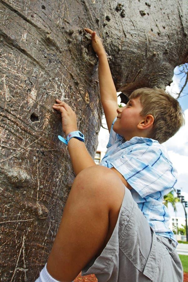 chłopcy wspinaczkowy drzewo zdjęcia stock